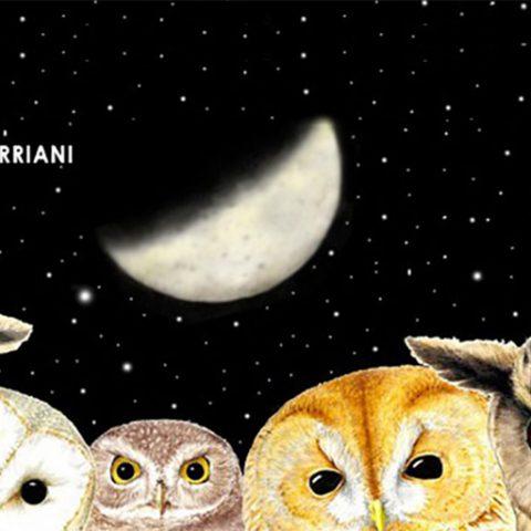 eventi 2017 mostra torriani rapaci notturni